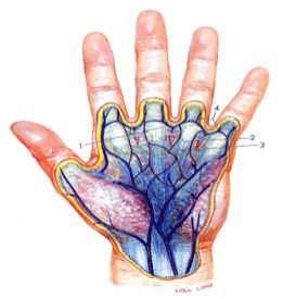 Innere Biometrie: Handvenen